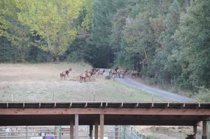elk small